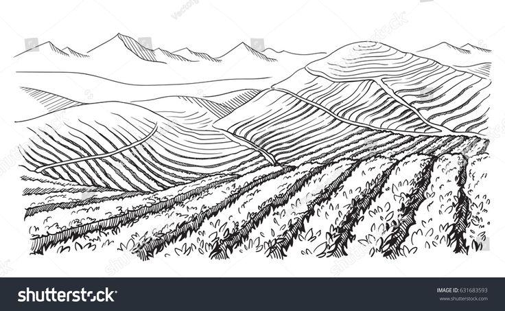 Coffee Plantation Landscape Graphic Style Handdrawn Stock Vector ...