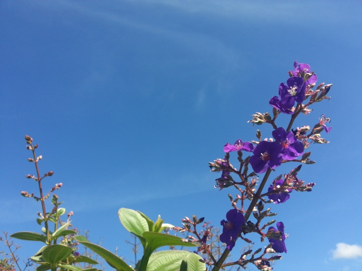 ...algo de mi conciencia con morados colores  tomó forma de flor y careció de espinas