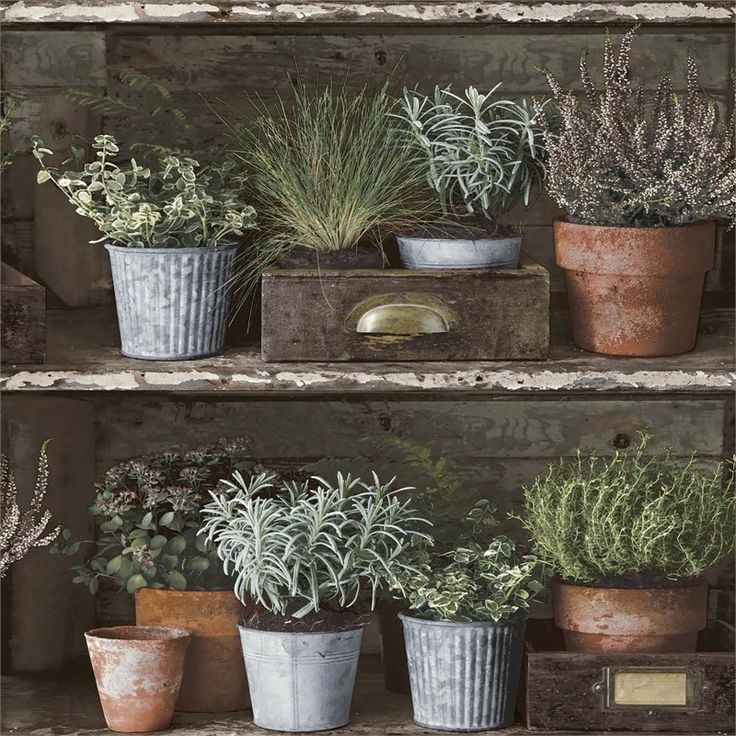 Find Grandeco Herb Shelf Multi Paste the Wall Wallpaper at
