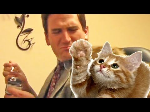 Sometimes super low-fi is all you really need! Kitty Commercial 4 Fur-Kids - YouTube