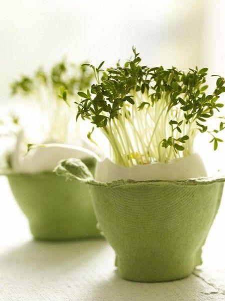 Noch mehr tolle Bastelideen zu Ostern finden Sie hier. Zum Beispiel mit Kresse bepflanzte Ostereier.