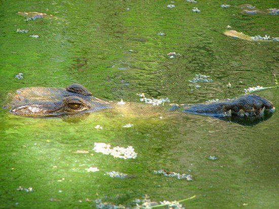 Photo of Malcolm Douglas Crocodile Park and Animal Refuge in Broome