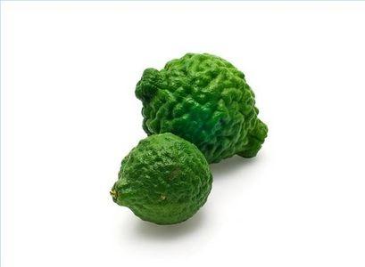 How to Grow Kaffir Lime Trees Indoors