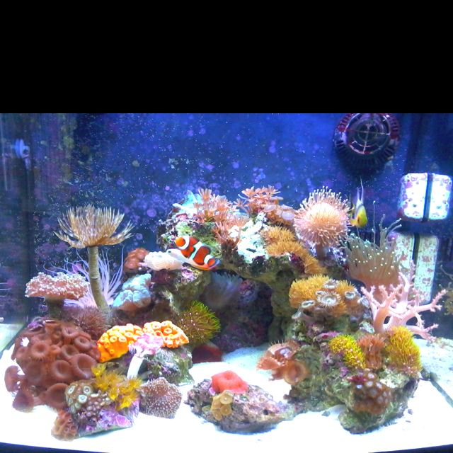 My 29g saltwater tank.. My first tank ever, and it's so addicting..;()