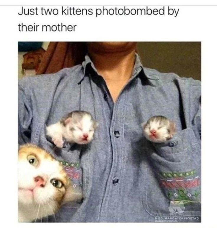 10 Purrfectly Hilarious Cat Memes Guaranteed To Make You Laugh