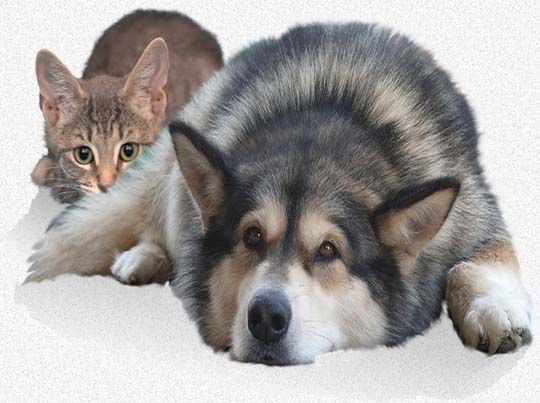 Permalink to Best Meat For Dogs With Kidney Disease