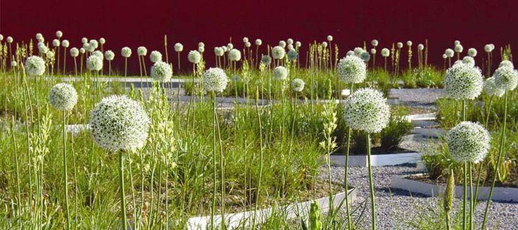BUGA_05 Rainer Schmidt Landscape Architecture