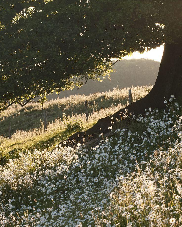 Tree & Daisies #travel