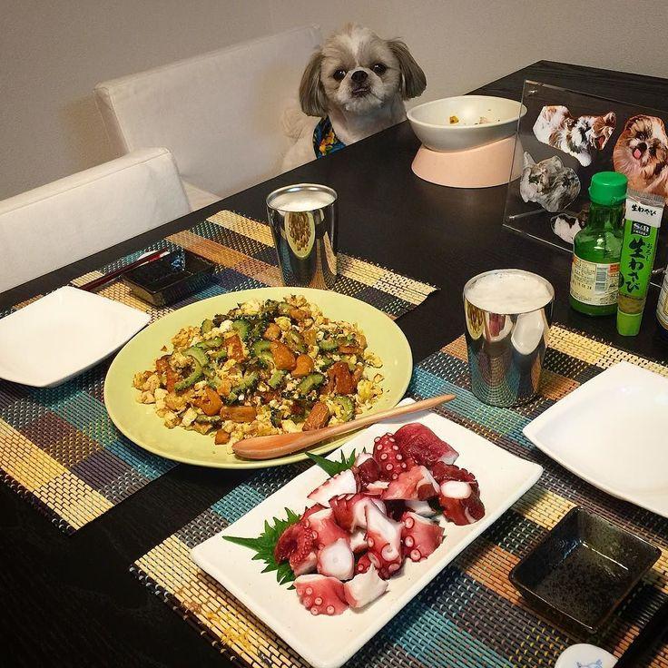 今夜の貴族の晩餐はゴーヤチャンプルとたこぶつをヤラカシたよ( ) ではでは( ω)( ω)かんぱーい  #貴族の晩餐 #シーズー #愛犬まゆげ by mayuge0807
