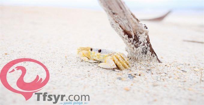 تفسير الرمل في المنام