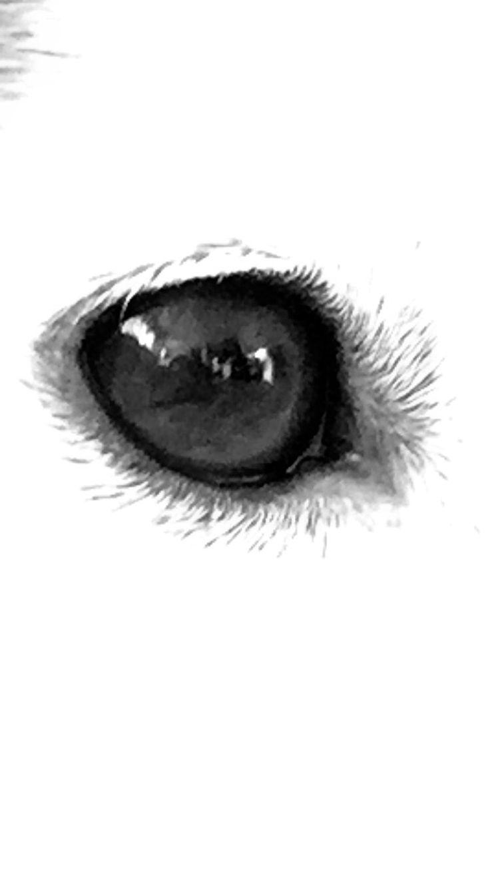 Juno's eye in black & white