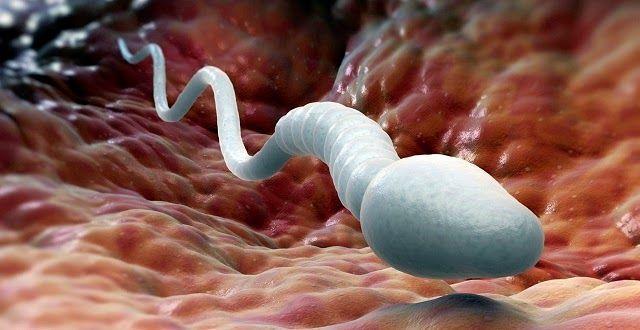 كيف يحدث الحمل و متى يحدث الحمل