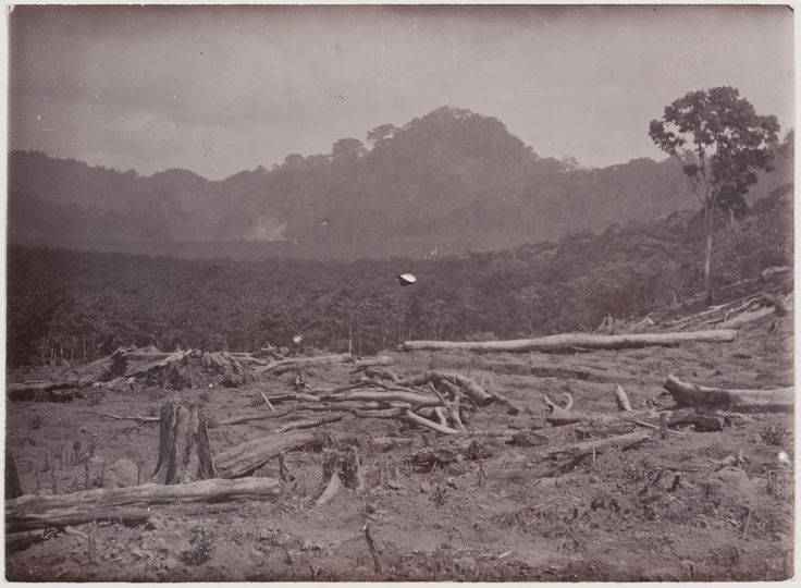 View of a clearing before a forest and hills
