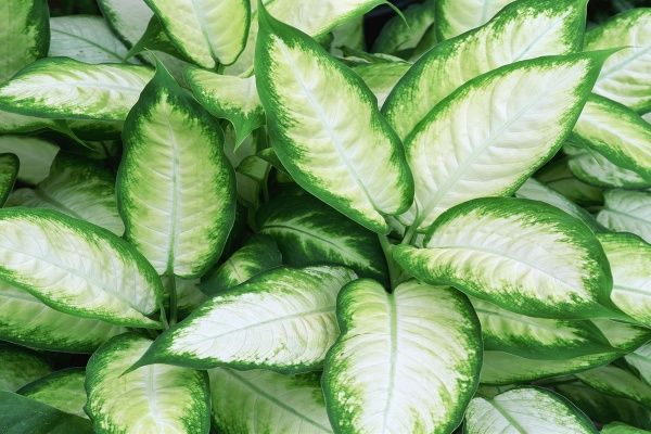 Skrášľujú byt, no môžu spôsobiť smrť: najjedovatejšie izbové rastliny, ktoré zrejme pestujete doma!