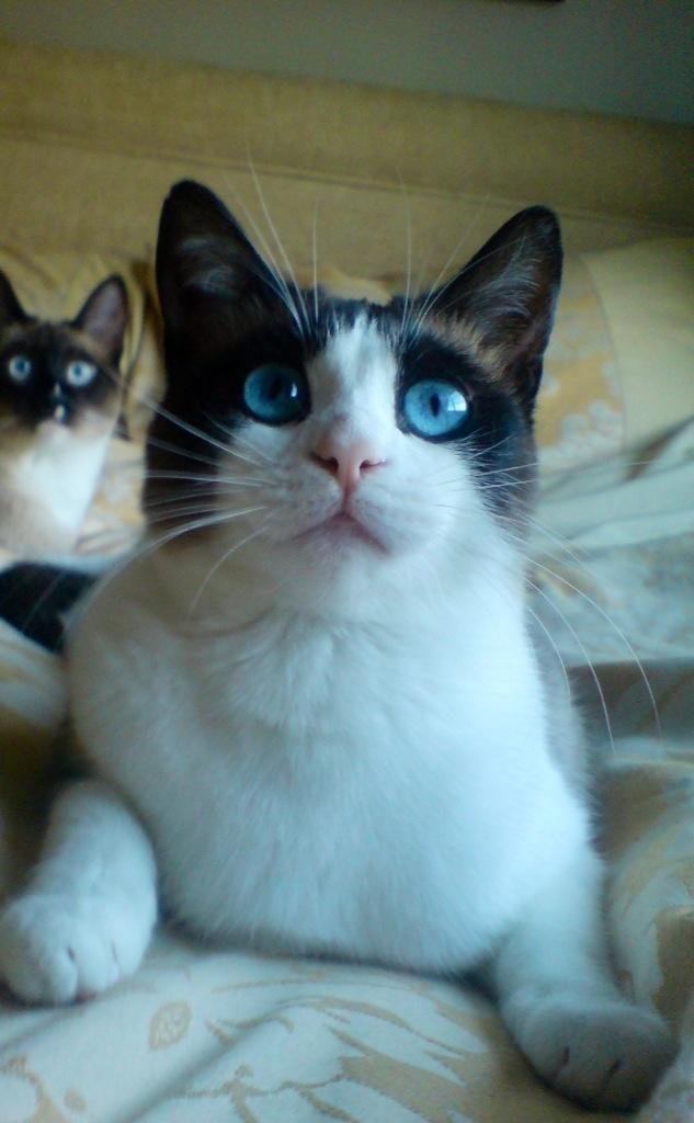 cat stevens mona bone jakon songs
