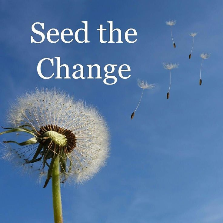 subscribe to @eviltester feed  ## Seed the change  If you want to change something and you want to accelerate the pace of change then you can seed the change with someone else's experience.  This doesn't mean - reading or watching their videos - this means working directly with them.  Seed your process with people who have already manifest the change you want to see.  - hire contractors or consultants that know how to do what you want to do  Make sure that they are working with staff who are…