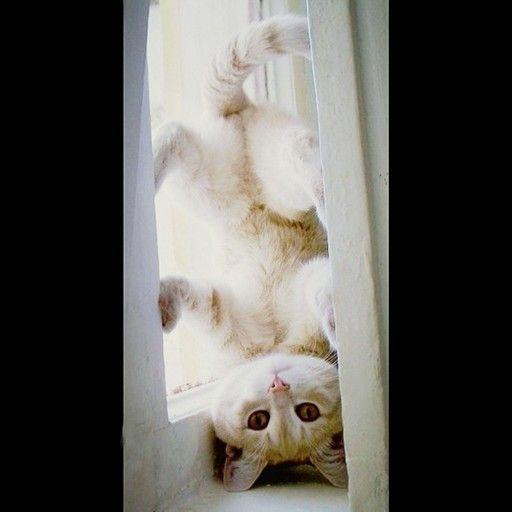 Цирк дю Котей!  А у вас бывает такое?  #кот #котики #котик #коты #котэ #котейка #apollo7 #apollo7paks #москва #фото #стиль #fashion  #подарок #цвет #мода #мимими #детивтренде #красиво #мило #улыбка #друзья #работа #момент #упаковка #инстамама #детивтренде #cat #детскаямода