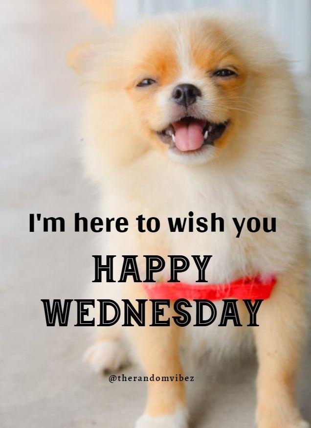 Happy Wednesday Meme : happy, wednesday, Funny, Wednesday, Quotes,, Sayings,, Pics,, Images, Happy, Wednesday,, Quotes