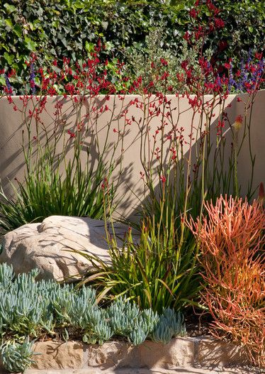Colorful plant palette – drought tolerant plantings – kangaroo paw with firestick