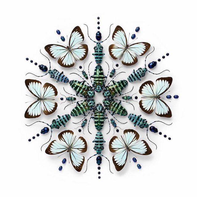 Mosaïques d'insectes exotiques par Christopher Marley