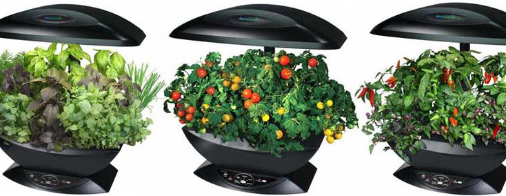 AeroGarden - Automated Indoor Kitchen Garden I so want one of these.