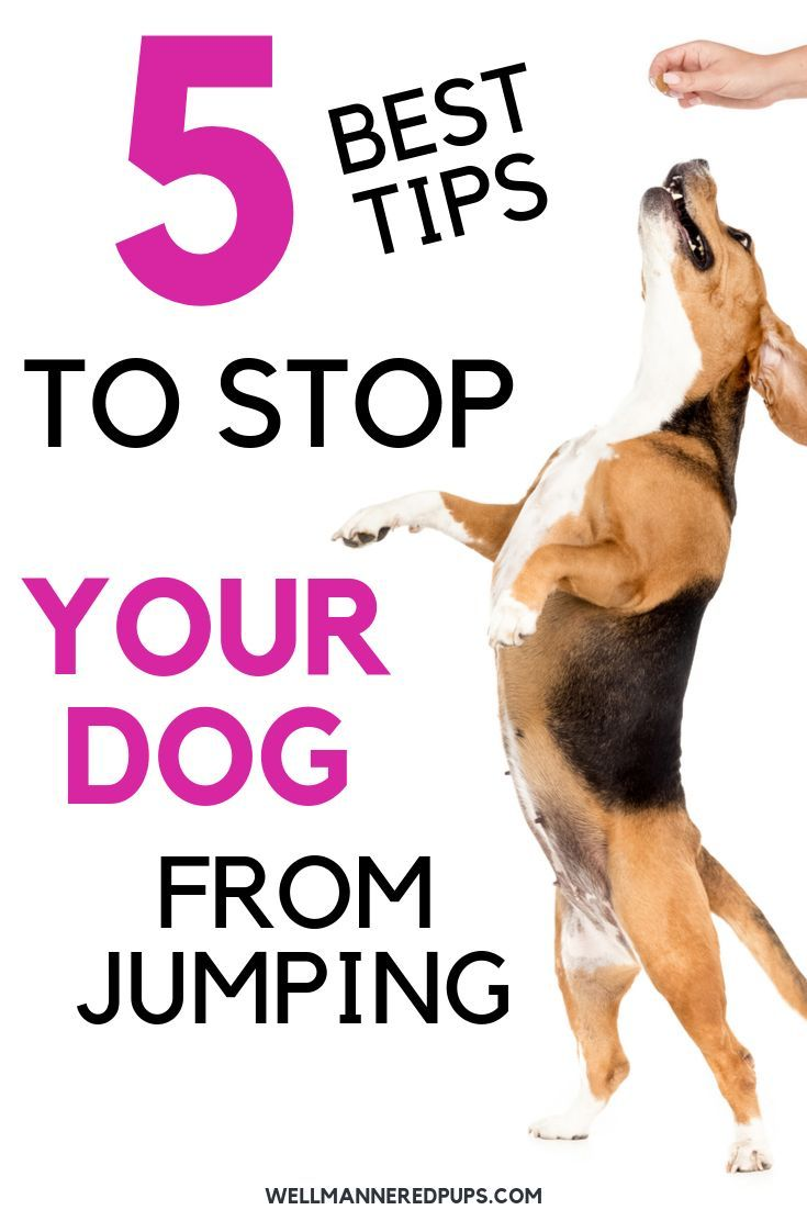 Dog Training Tips To Stop Your Dog From Jumping On You And Guests