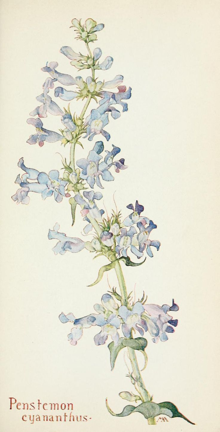 images about Botanical Art II on Pinterest Watercolors