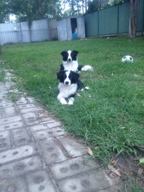 PADDY/PAMMY........VERY HAPPY DOGS! TRUST ME! dogsbigdayout.com.au