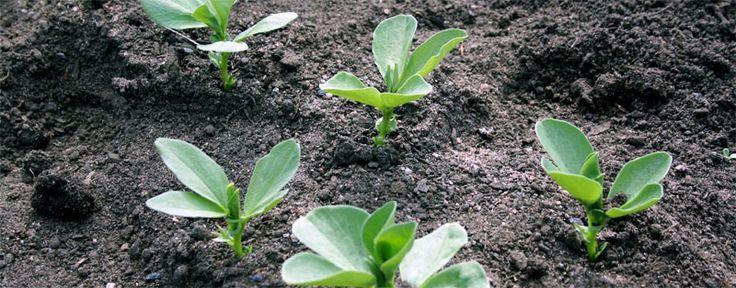 Suomen kasvukausi on lyhyt pohjoisen sijainnin vuoksi. Vaikka valoa riittääkin, maa lämpenee talven jälkeen hitaasti. Tämän takia monia vierasperäisiä kasveja on esikasvatettava, jotta sato ehtii k...