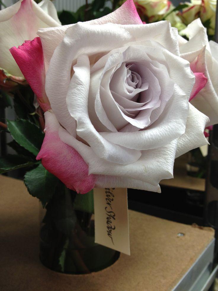 серебристые розы фото интересные вкусные