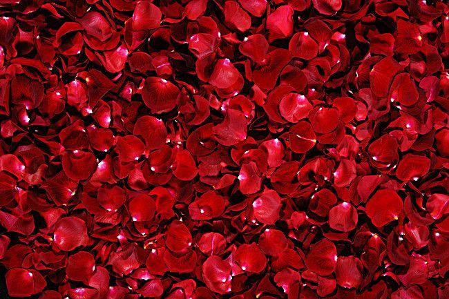 Romantic Rose Petals Background Red Rose Petals Red Roses Beautiful Red Roses