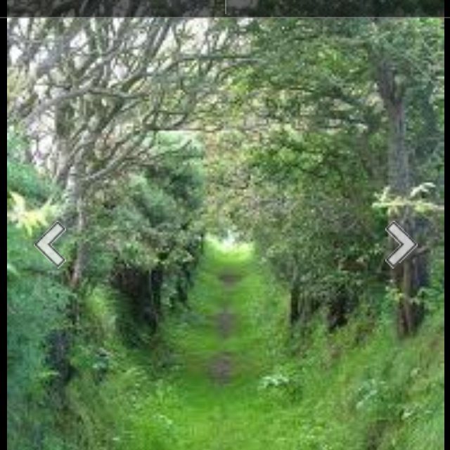: Trees Caves, Trees Caveireland, Buckets Lists, Favorite Places, Dreams, Green, Beautiful, Places I D, Gardens
