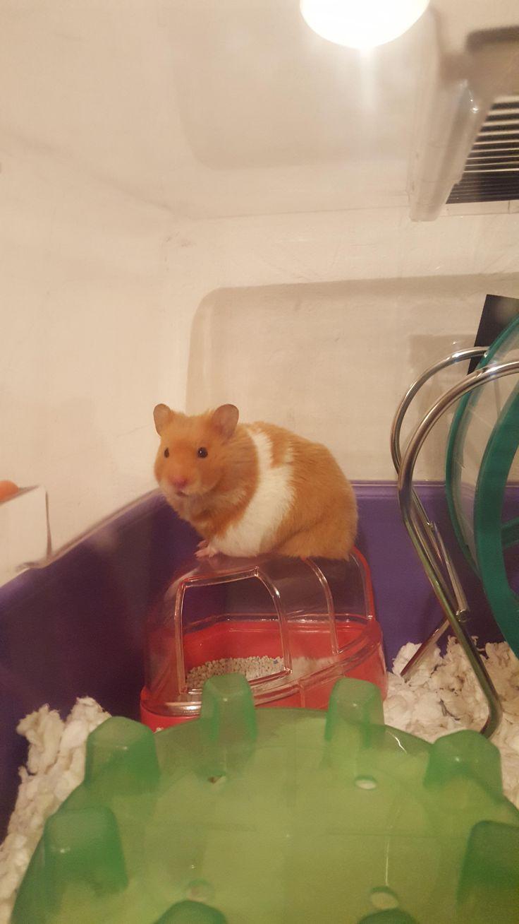 """Heeeyyy...""https//ift.tt/2QihmqS Hamster, Cute"