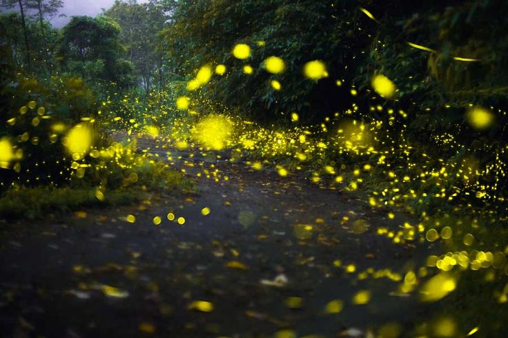 Nanacamilpa es un bosque cercano a la ciudad de Tlaxcala en donde se reúnen las luciérnagas para reproducirse; es un espectáculo para recordar.