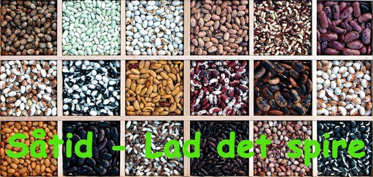 Basilikum - beskrivelse af mange slags