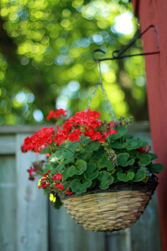 ✿campestre - Flower #Bokeh