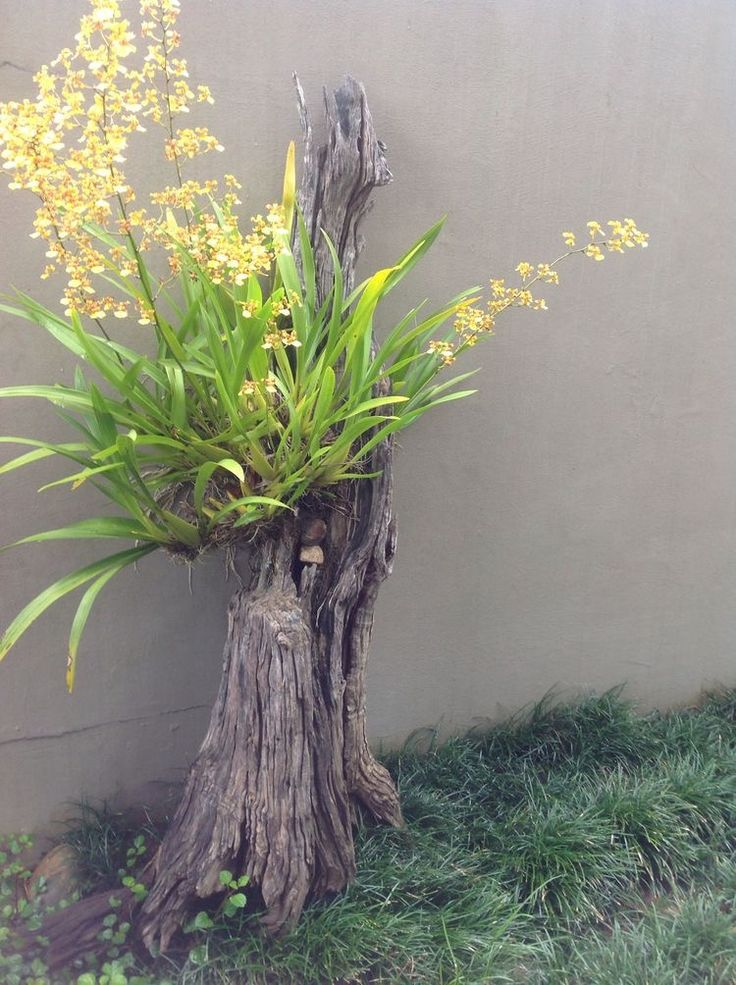 Yellow orchid on driftwood