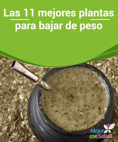115 best comida para adelgazar images on pinterest for Plantas para bajar de peso