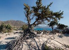 http://www.west-crete.com/dailypics/crete-2015/11-15-15.php