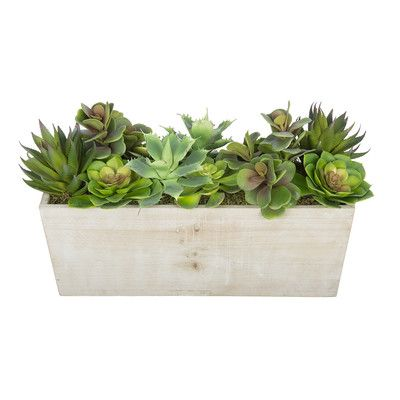 House Of Silk Flowers Artificial Succulent Garden Desk Top Plant In  Decorative Vase Base Color: