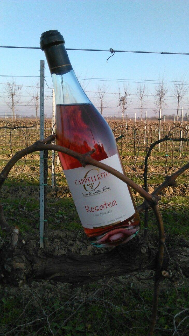 ROSATEA ( rosato di raboso) IGT