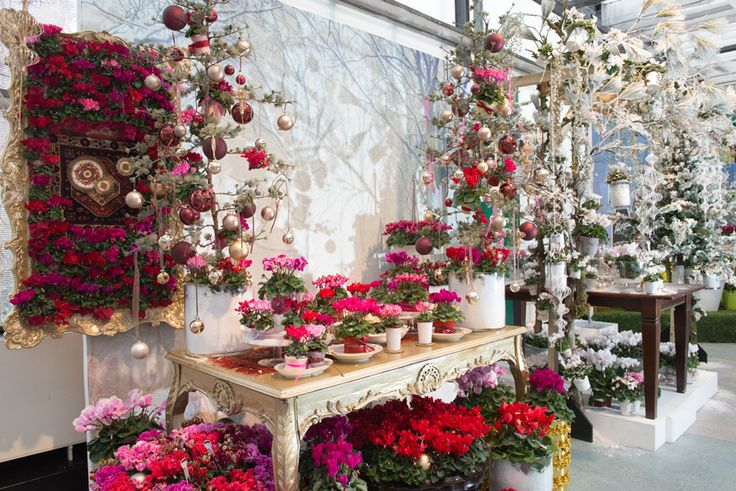 Fabulous presentation at Flower Trials