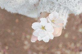 Spring, Cherry Blossom, Spring Flowers