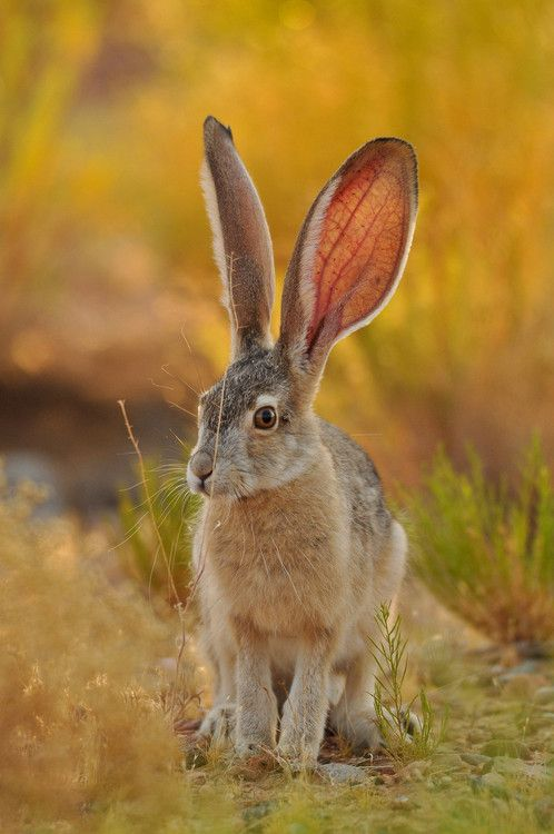 earthandanimals: Wild Rabbit Photo by Gustavo Carneiro - Explore the World with Travel Nerd Nici, one Country at a Time. http://TravelNerdNici.com
