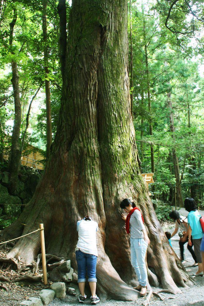 日本最大のパワースポット「伊勢神宮」の中でもさらにパワーがみなぎるスポットはここだ! | 三重県 | Travel.jp[たびねす]