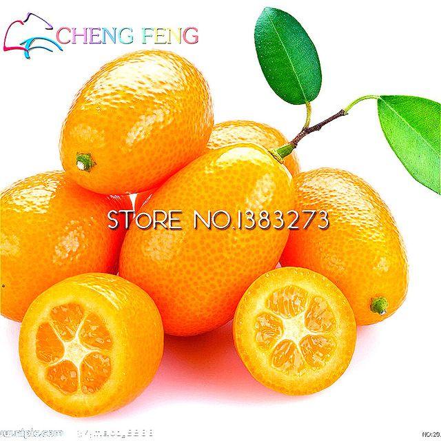 дешевые семена мандаринов 10 UNIDs съедобные плоды дерева семян цитрусовых мандарин Бонсай Семена горшечных растений Сад Sementes Малые