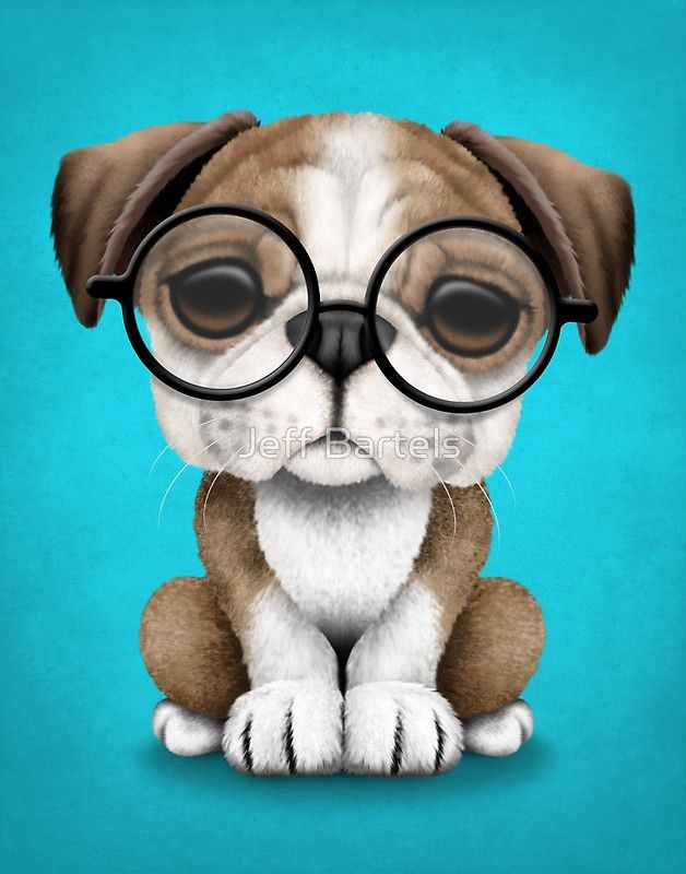 Cute Baby Bulldogs Wallpaper Cute English Bulldog Puppy Wearing Glasses On Blue Jeff