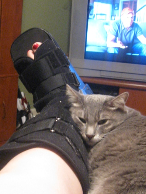 17 Best Images About Cats That Offer Assistance On