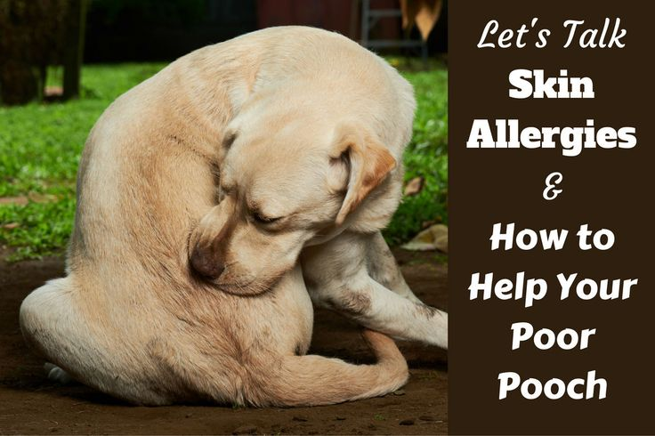 Best 25 Dog Skin Allergies Ideas On Pinterest Skin