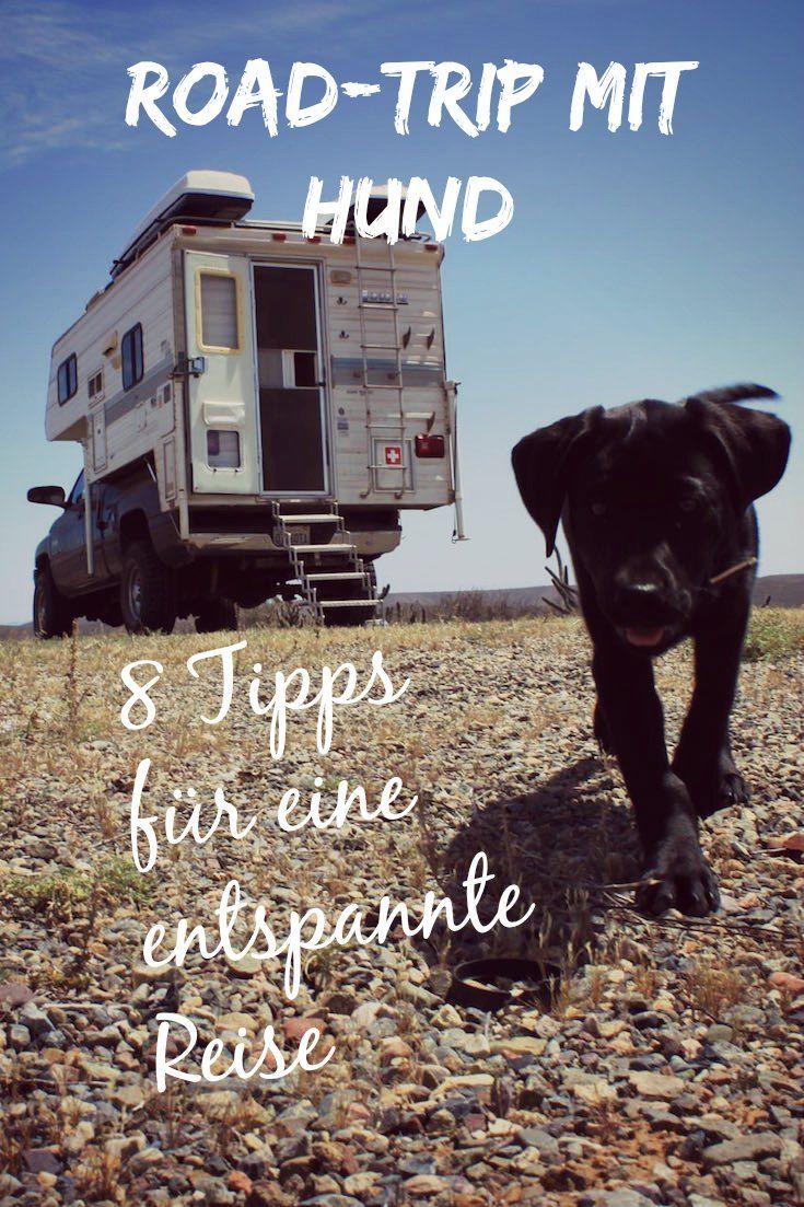 Road Trip mit Hund – 8 Tipps für die perfekte Reise